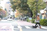 さんぽ同行撮影 横浜