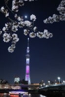 風景撮影 東京 横浜